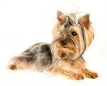 Hundezubehör