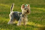 Hund spielt im Gras Hundespielzeug
