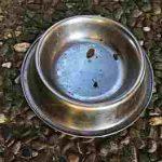 Hundefressnapf – welcher Fressnapf passt zu meinem Hund?