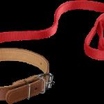 Hundehalsband mit Hundeleine