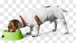 hund lederhalsband fressen
