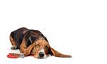 hund hundehalsband