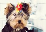 hund mit schleife strass