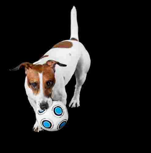 spielen mit Ball stärkt die Beziehung zum Hund