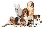 mehrere hunde hundebellen erziehungshalsband